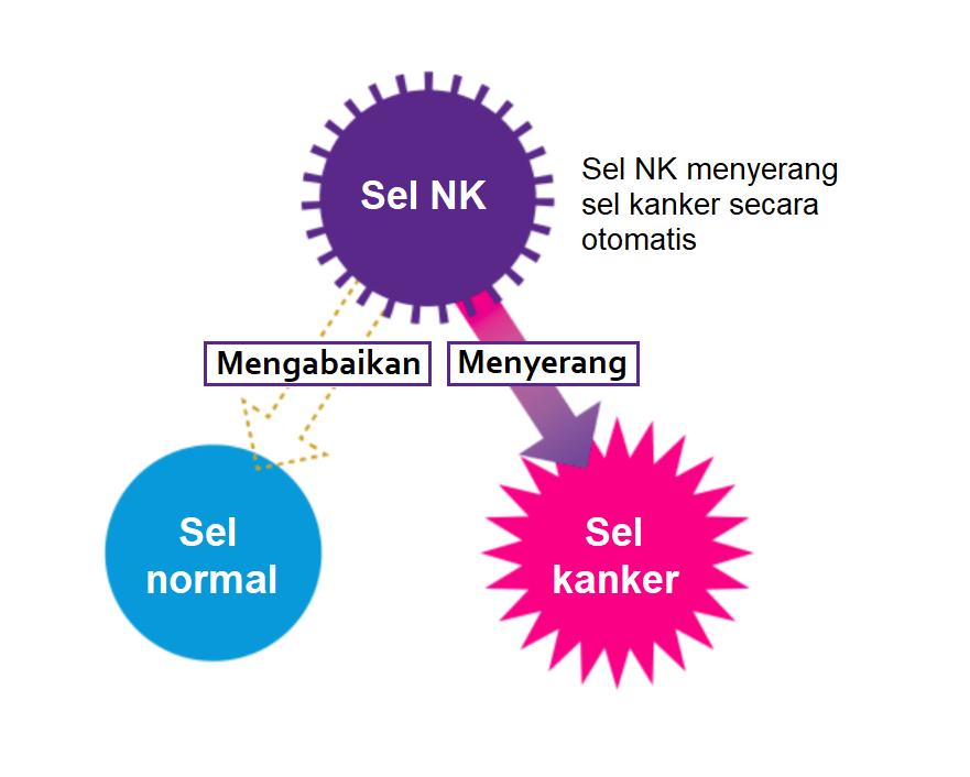 Sel NK