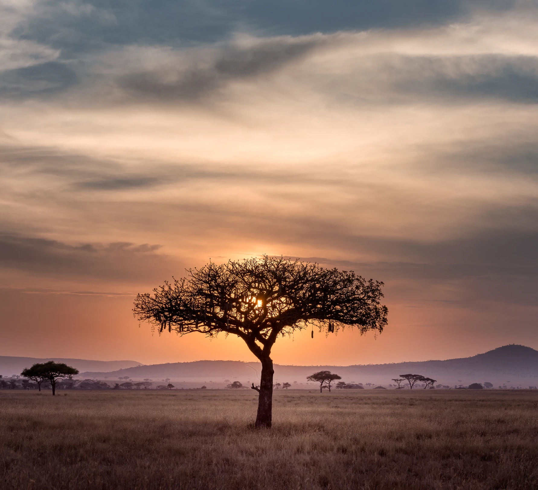 Tree in a plain.
