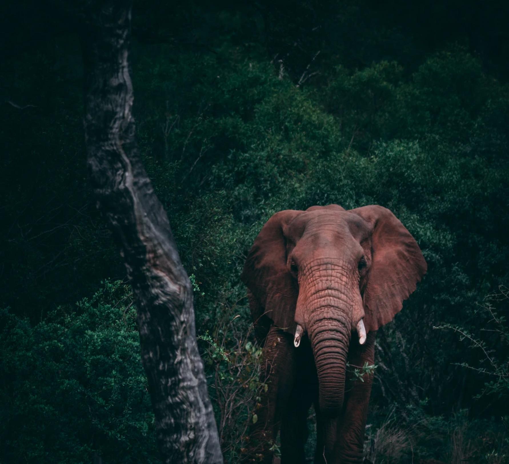 Elephant in a lush jungle