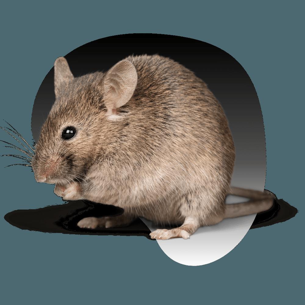 Pest Control Service Image