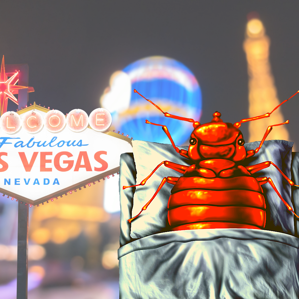 Does Las Vegas Have Bed Bugs?
