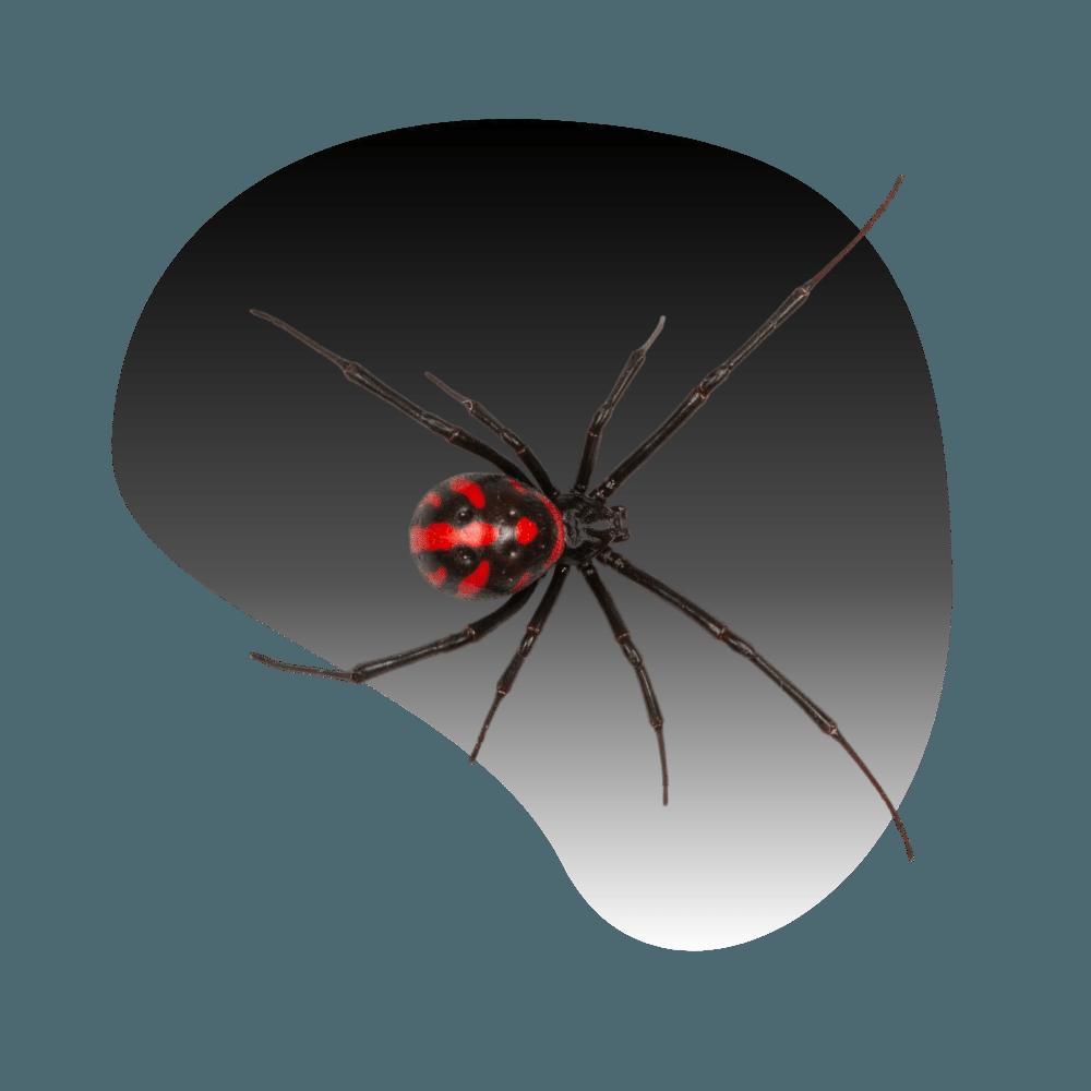 Las Vegas Spider Control & Exterminator
