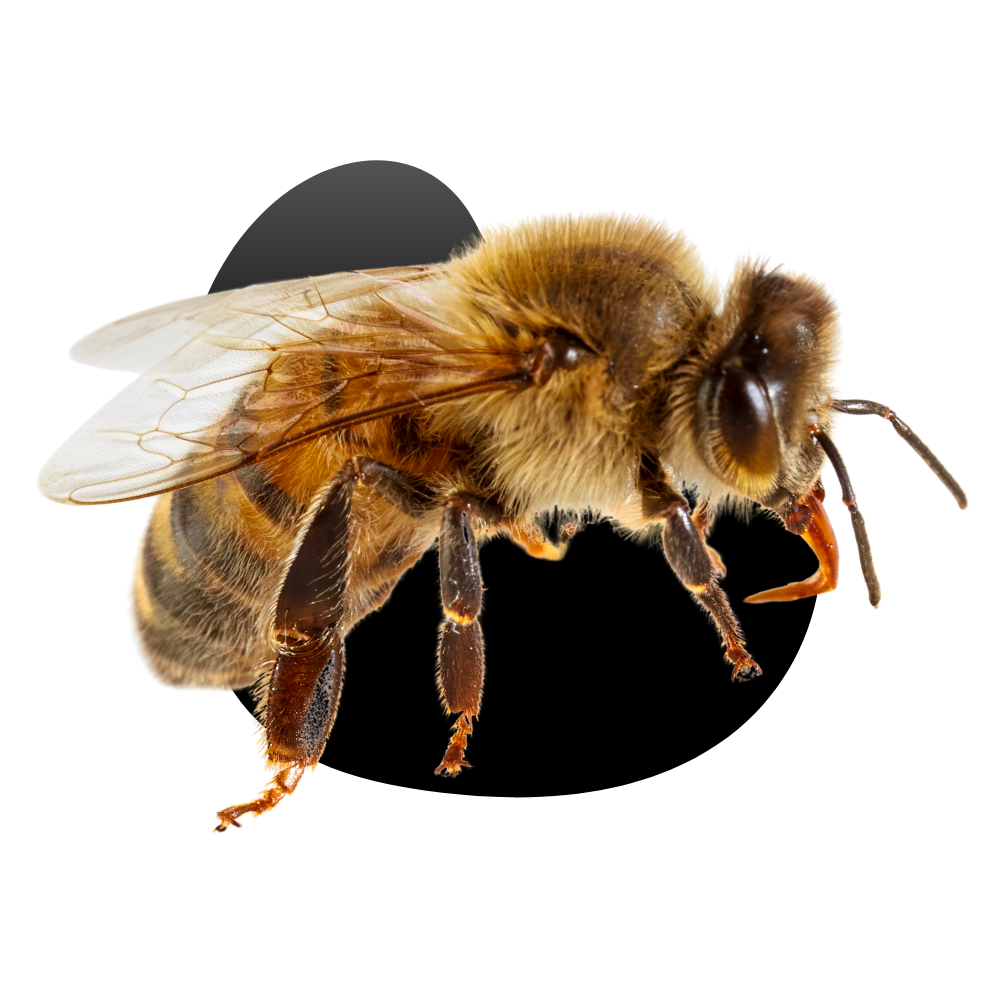 Las Vegas Bee & Wasp Removal Services