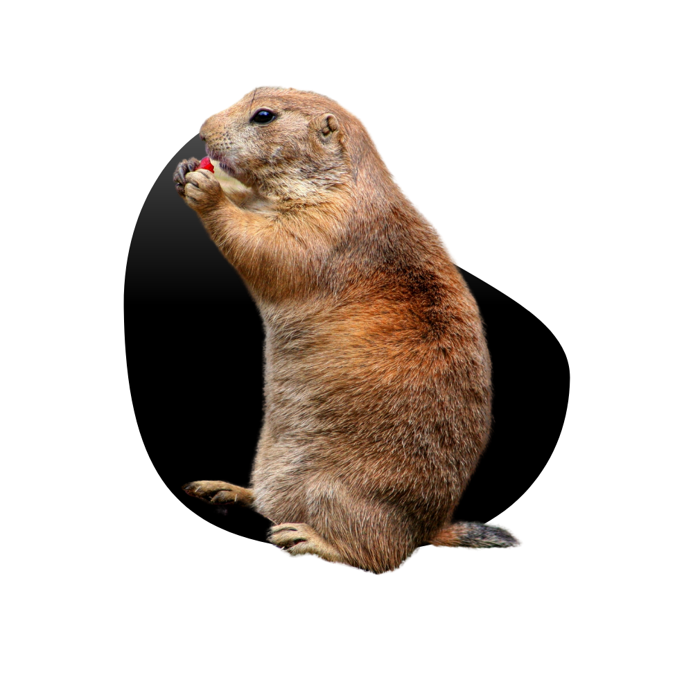 Las Vegas Gopher Removal Services