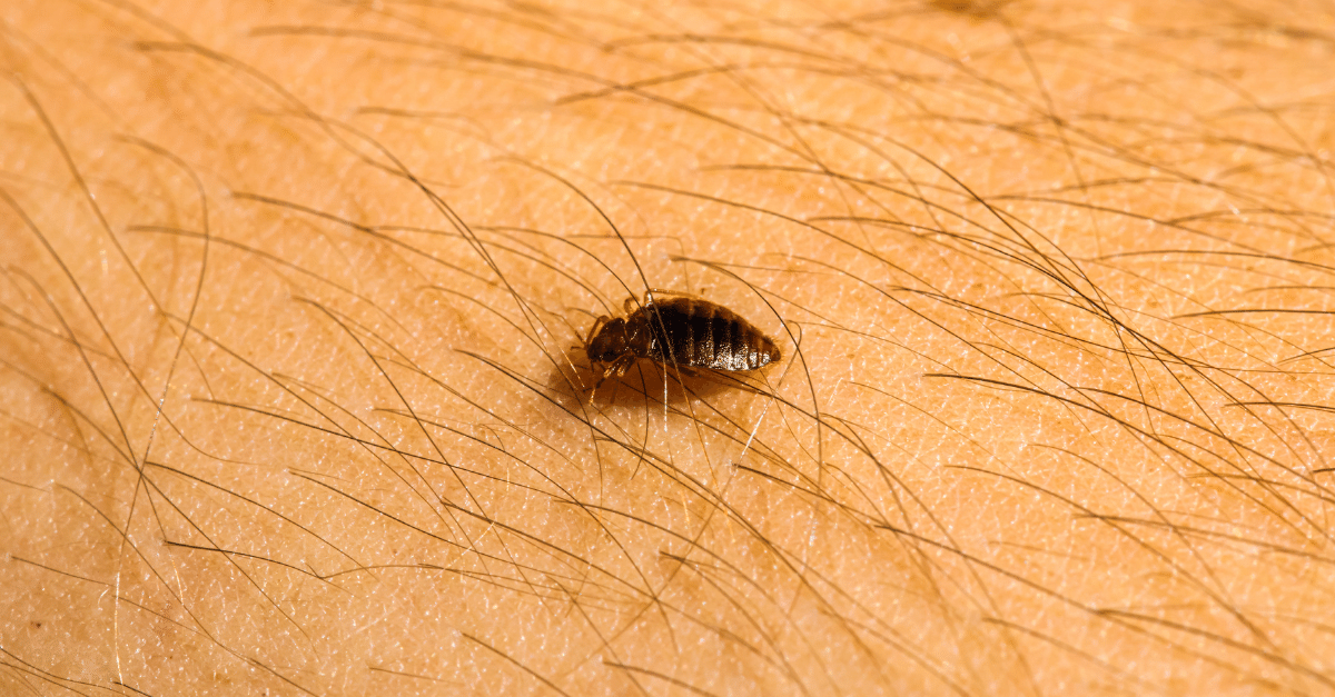 7 Interesting Facts On Bed Bugs