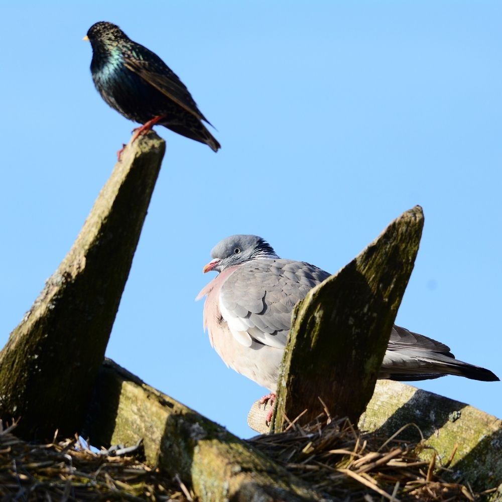 Bird Control: Tips for Choosing the Right Pest Company