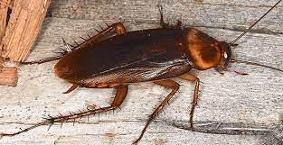 Cockroach Header Image