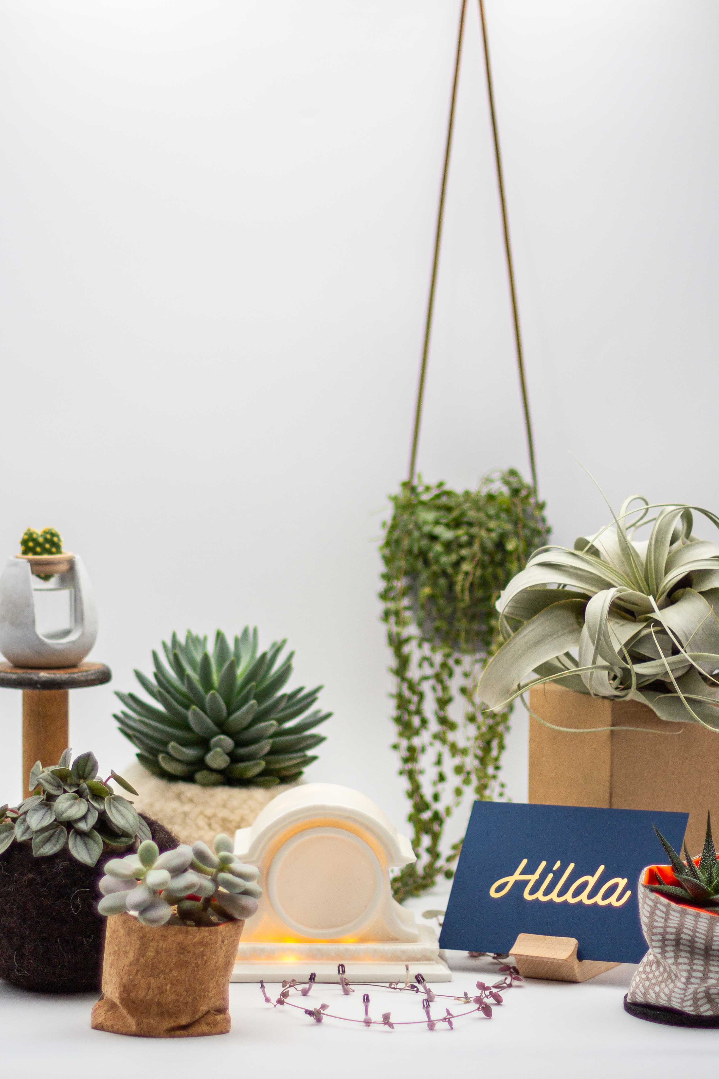 A series of more complex plants are shown with some of the products we stock that are harder to find at more mainstream stores.