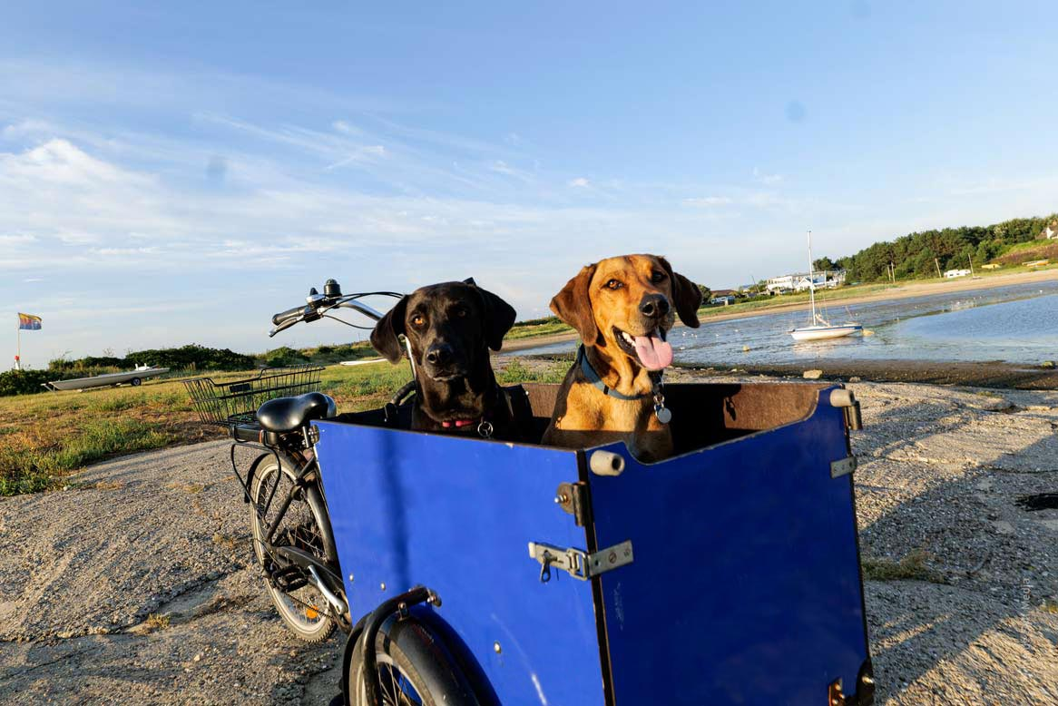 KüstenDogger für Hunde