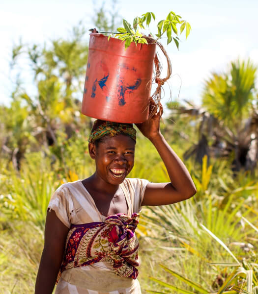 Woman carrying tree saplings in a bucket on her head in a jungle