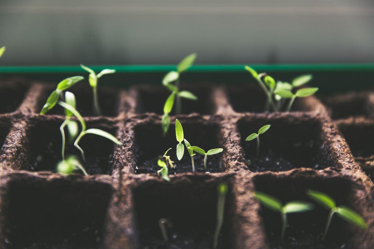 A Dozen Plants Ready to be Transplanted