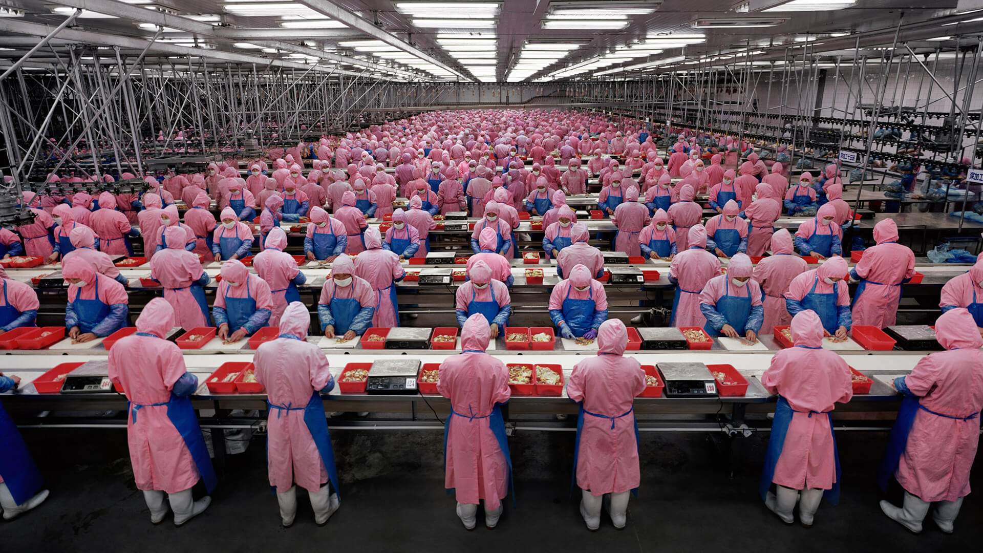 Factory workers in pink and blue plastic overalls, form Manufactured Landscapes.