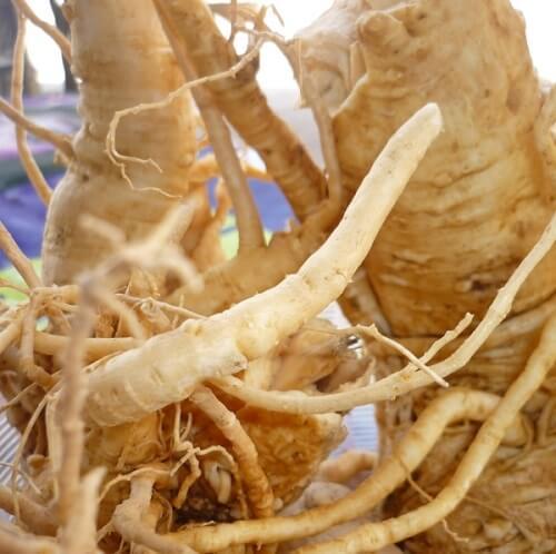 Bài thuốc tăng cường sinh lý nữ từ rễ đinh lăng