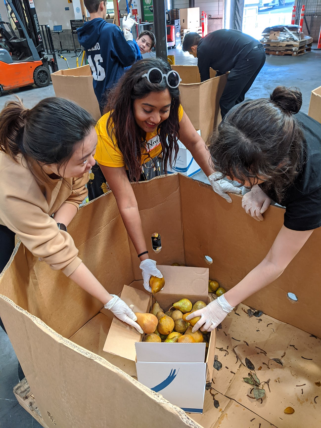 3 women putting pears in a box at a food bank