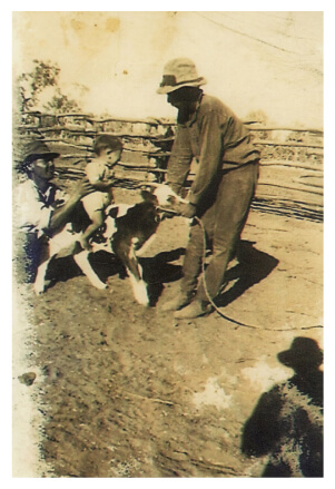 an old photo of Banjo Morton feeding a calf while a toddler is sitting on it's back and an adult is holding the toddler.