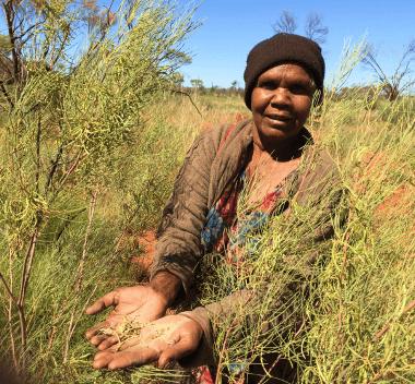 a photo of an Alyawarran in the bush