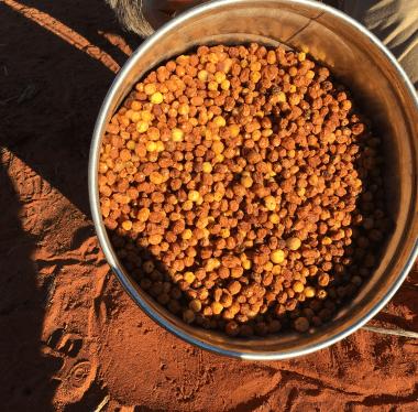 a photo of an Alyawarran bush seeds