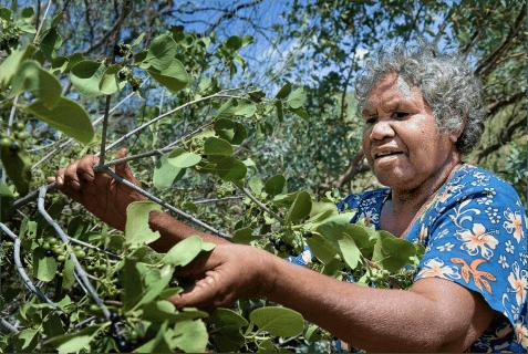 A photo of Bush berries