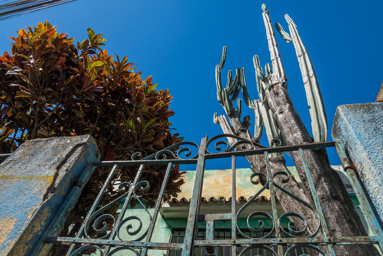 Jardín de Isabel Cristina, fotografía por Gabriel Nass