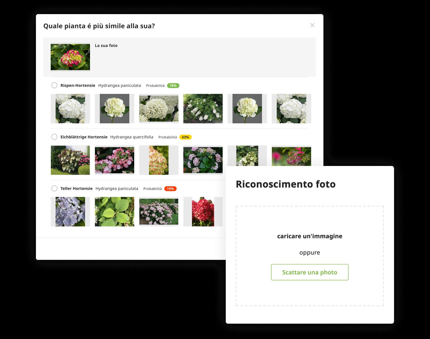 Pflanzen erkennen per Foto