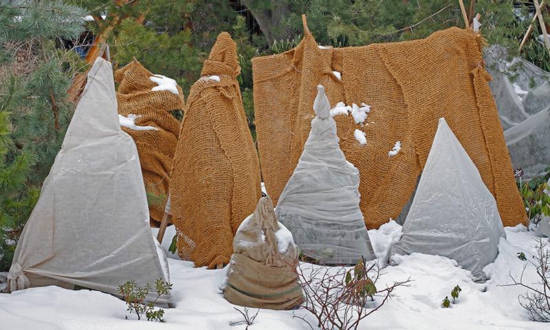 Proteggere le piante in vaso in inverno