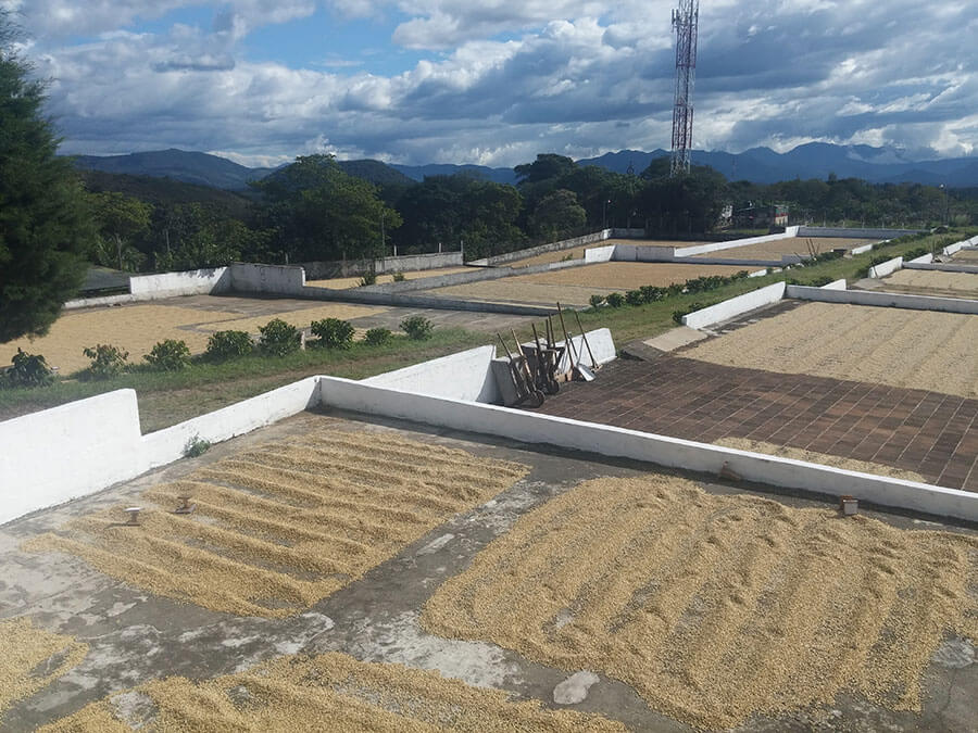 Our Dry Mill, strategically located in Fraijanes plateau region, has a pronounced dry season and abundance of sunlight which allows us to Sun Dry our beans on Terracota lined Patios.