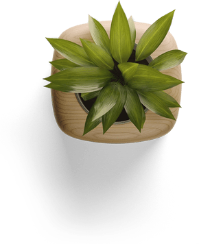 a beautiful, refreshing, green, leafy plant in a small wooden planter.