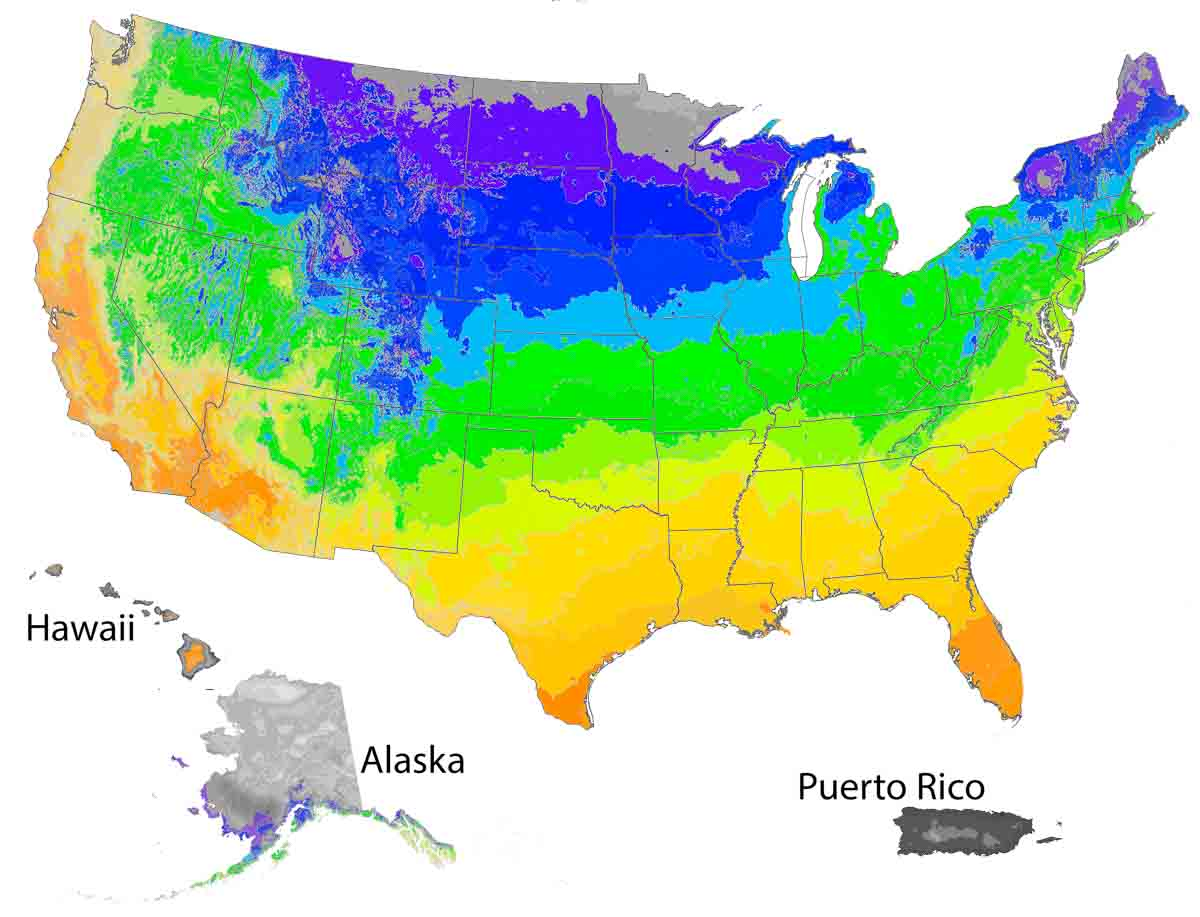 US Map with highlights of areas where this plant thrives.