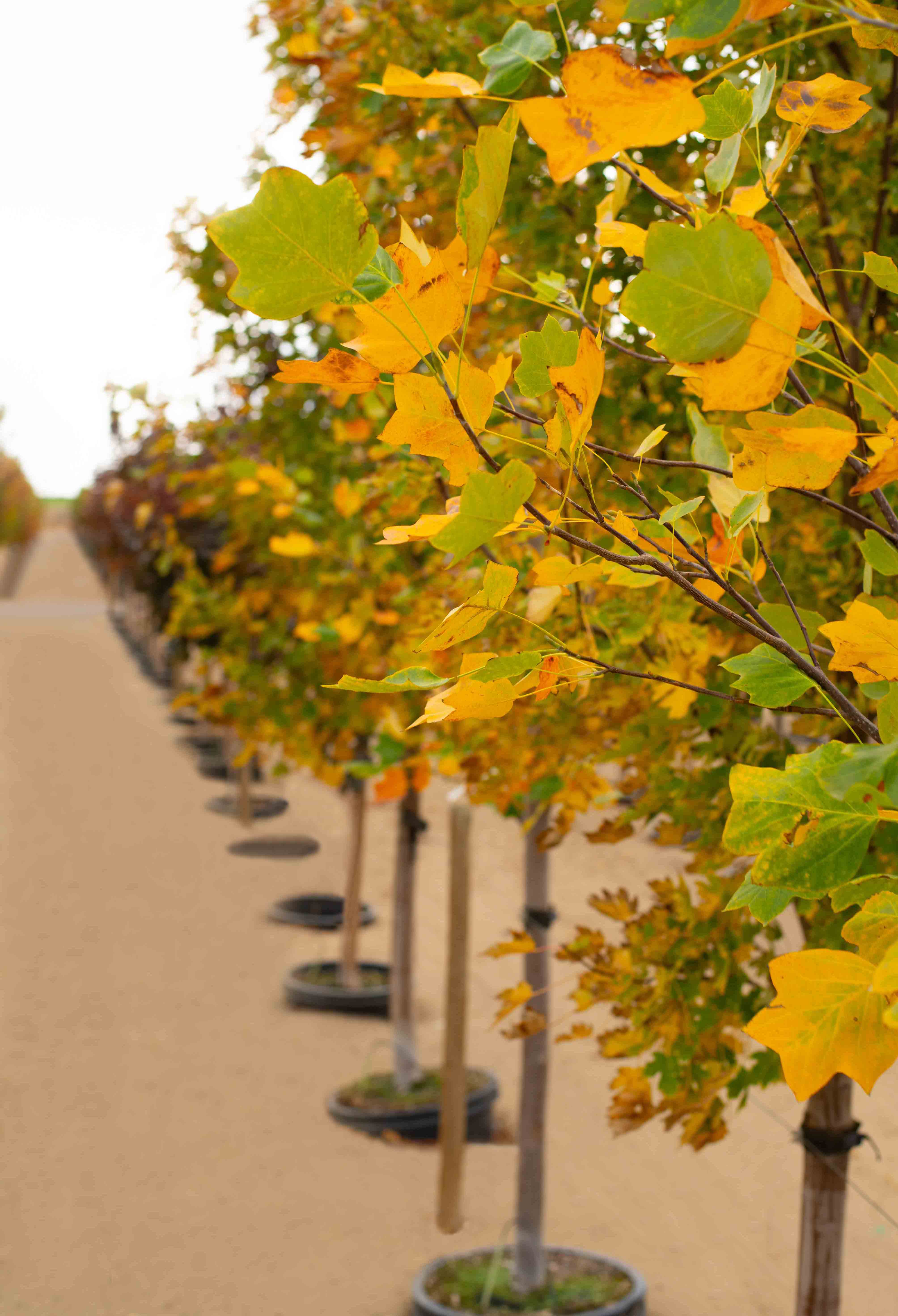 Why Fall is a Great Time to Plant Trees