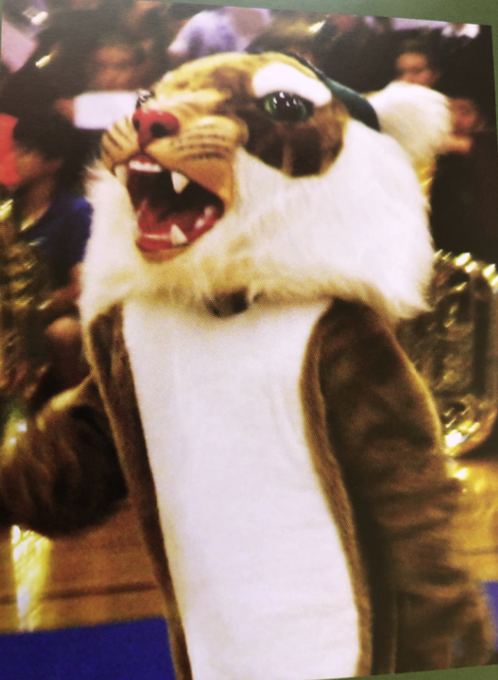 This is a picture of the WRMS mascot: the Wildcat.