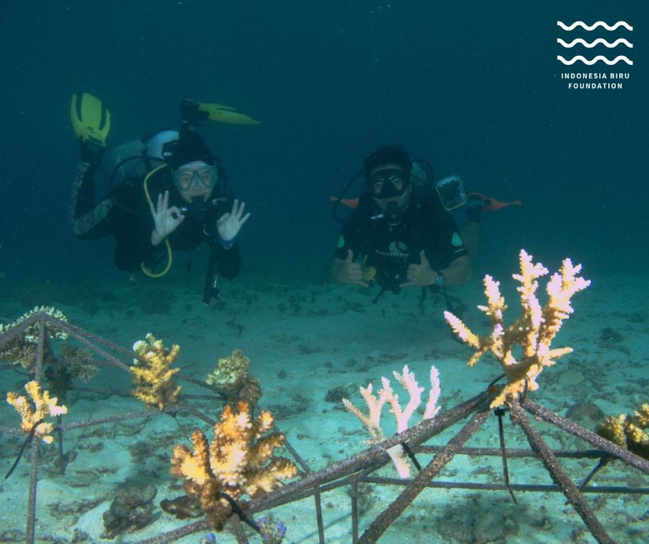IBF diving looking at corals
