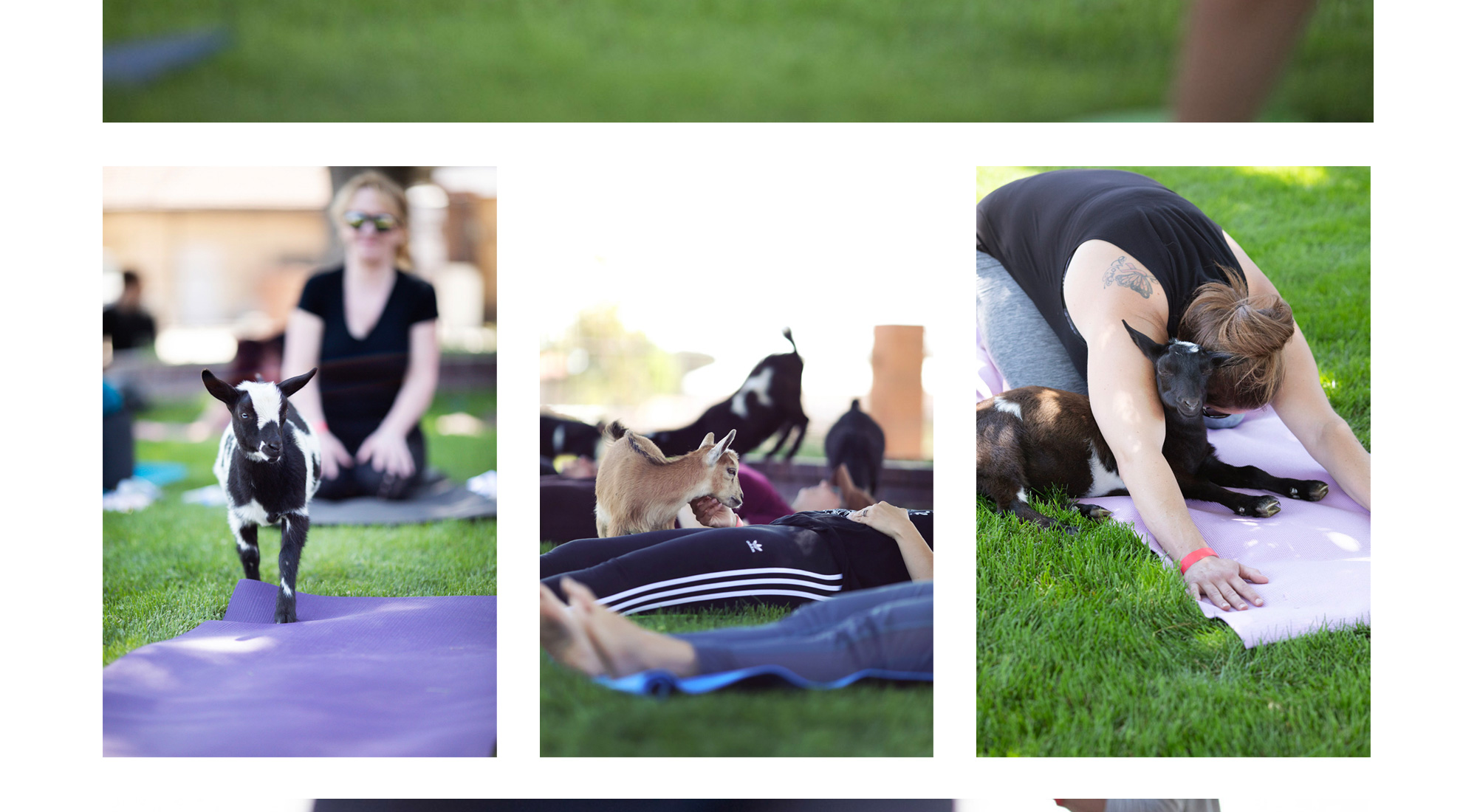 Flying Feets Farm - Goat Yoga