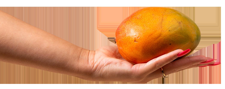 une main qui tient une mangue