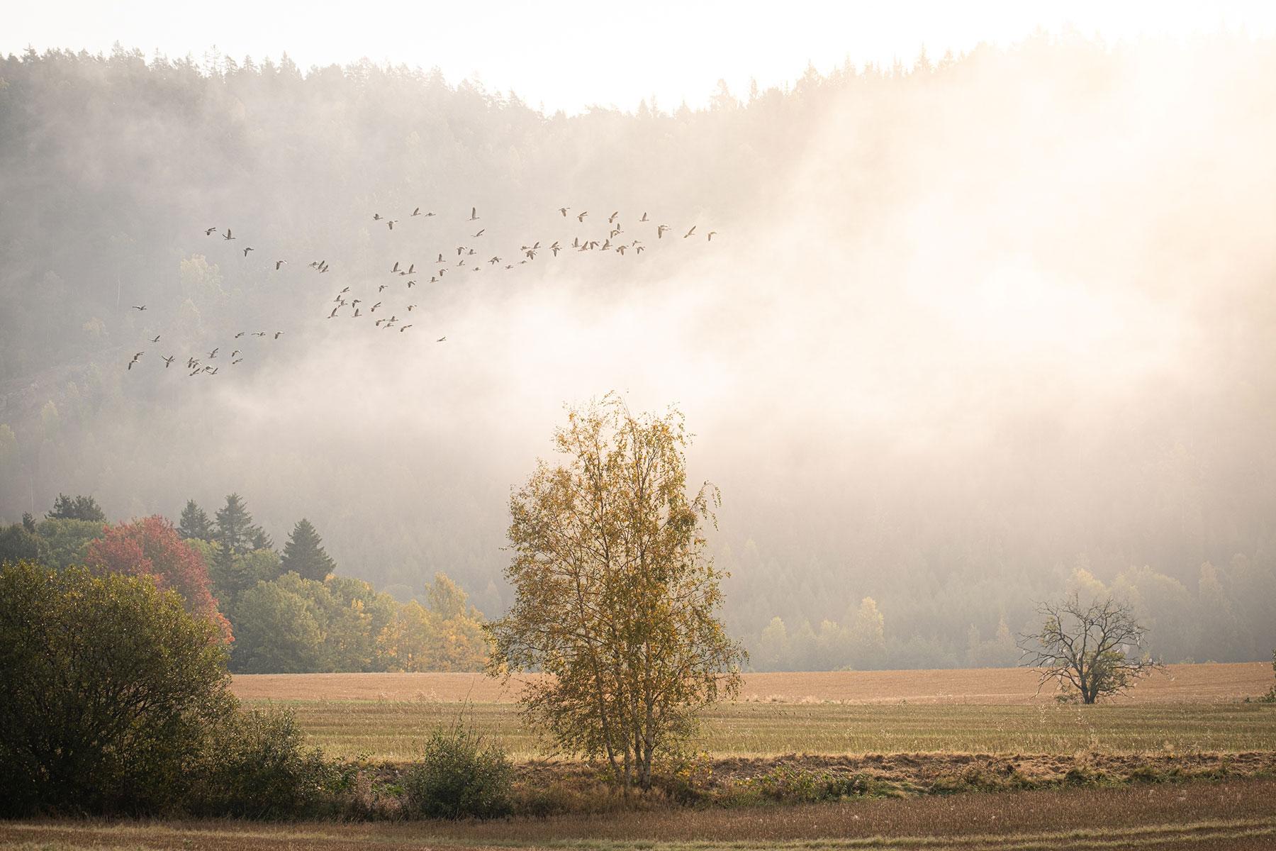 Calm, natural Norwegian landscape