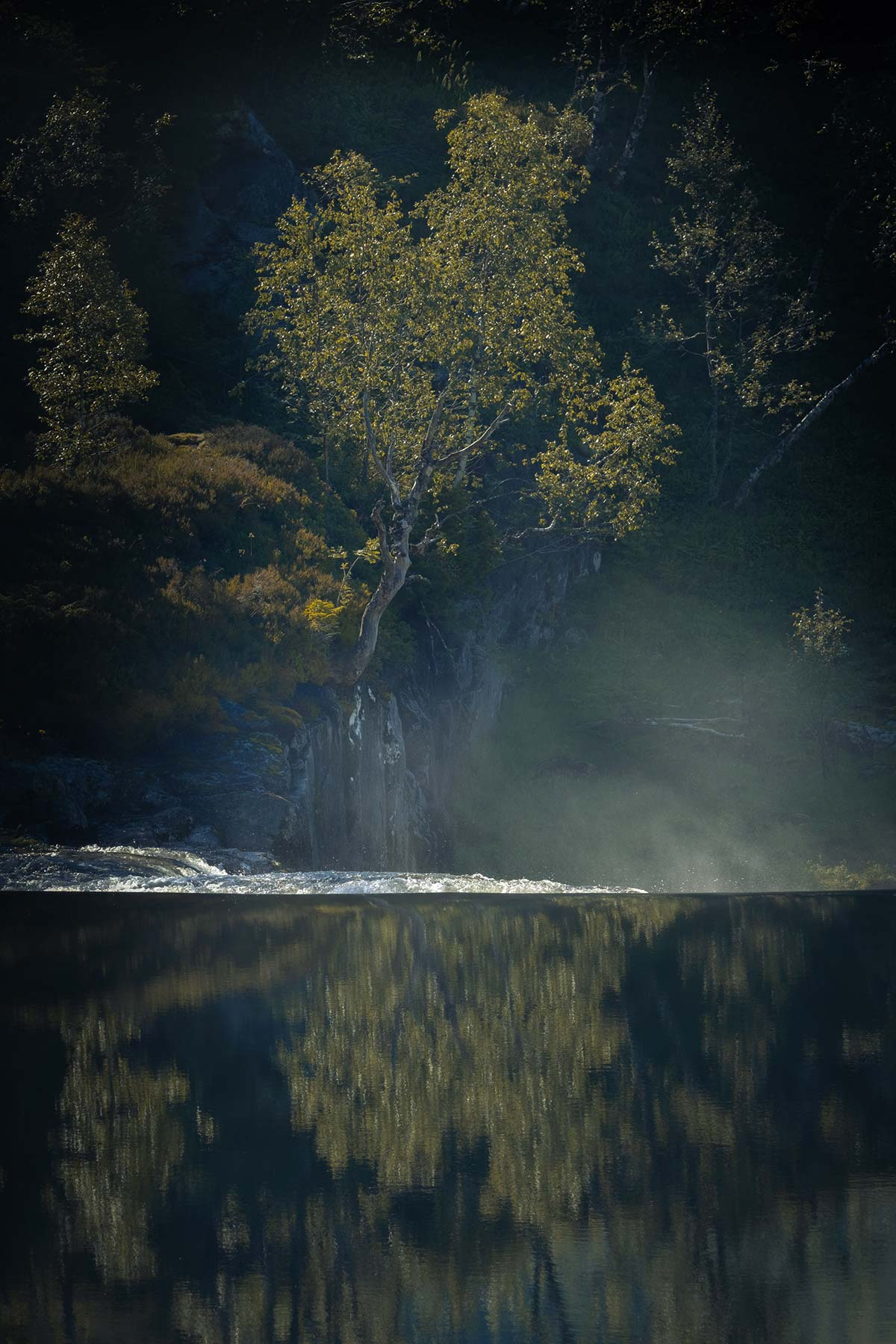 A lonesome tree reflected into the crystal clear water