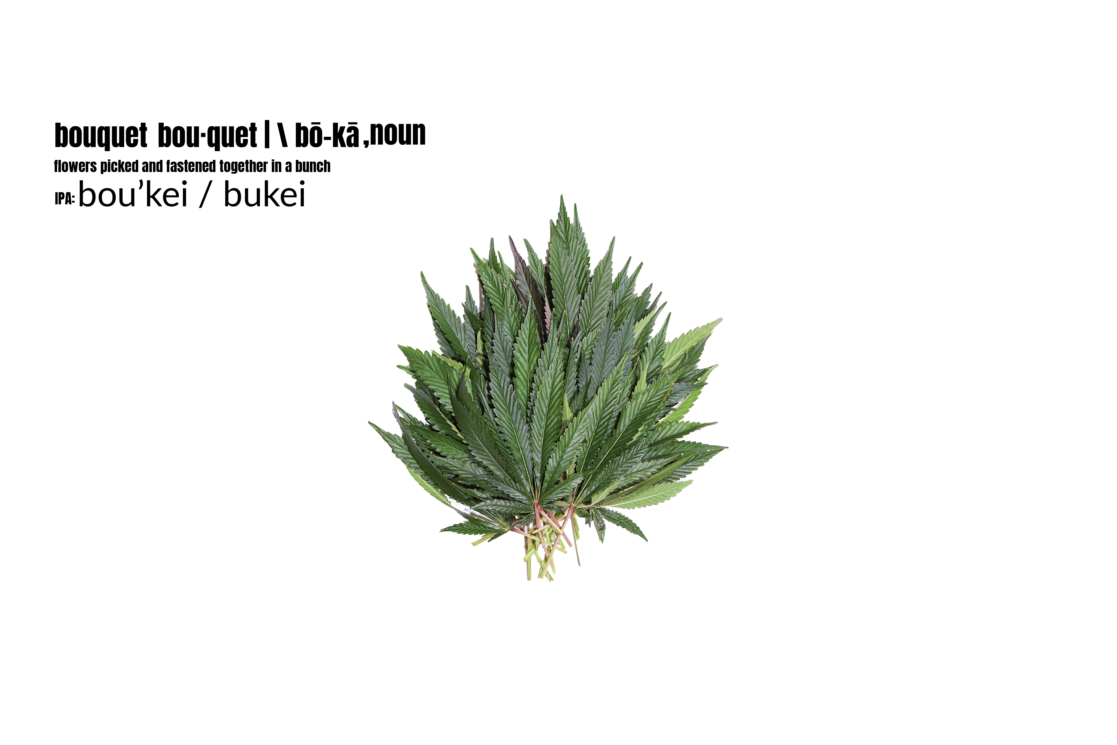 A bouquet of cannabis leaves