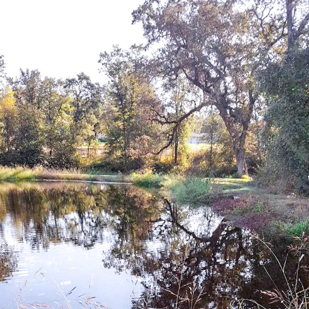 View across the pond of the creekside wedding ceremony site with oak trees. It can be altered for any wedding theme.