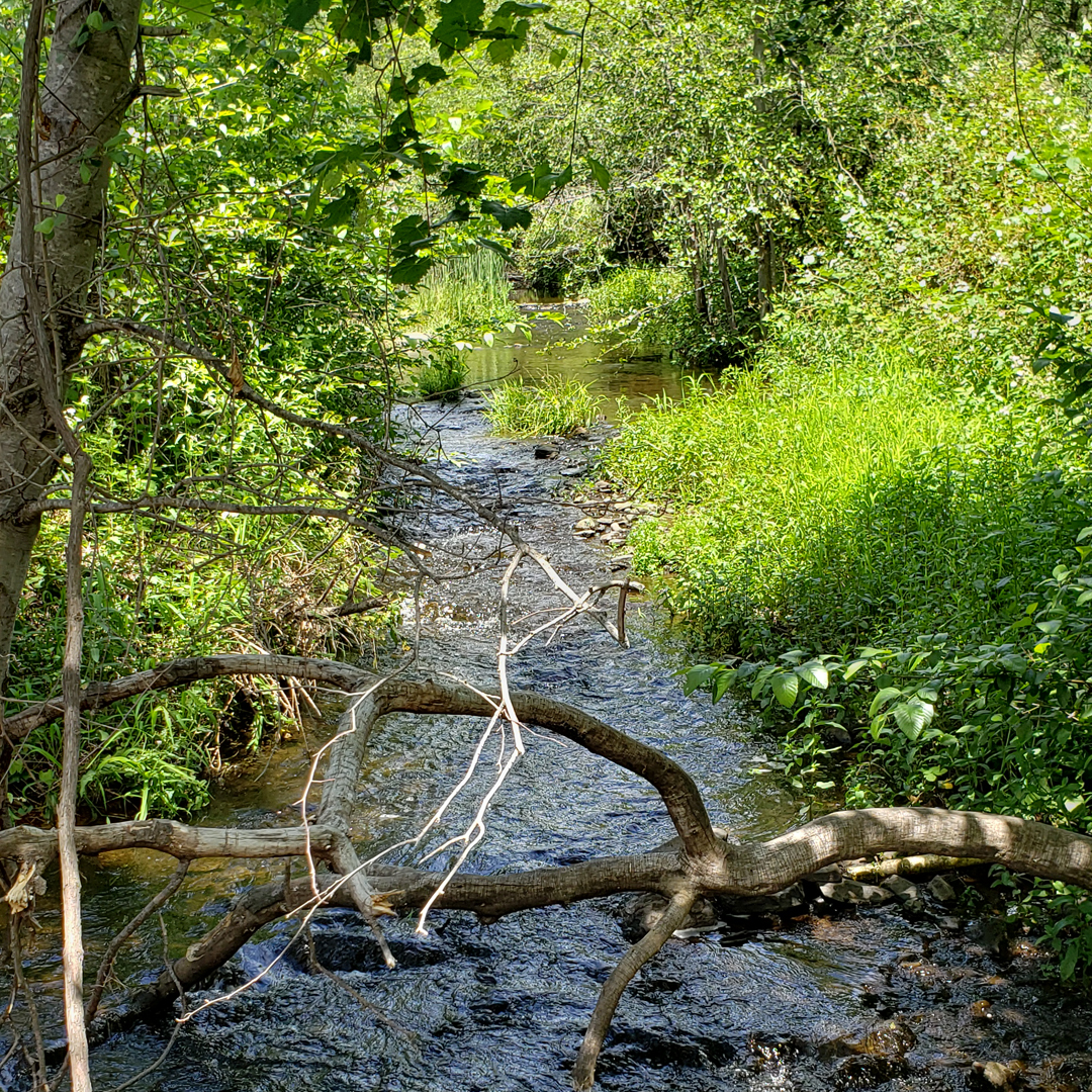 Year round flowing creek at our Oak Knoll waterfront ceremony site