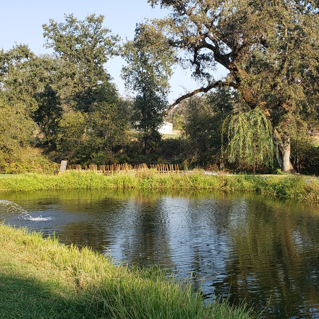 Looking across the pond with willow tree ceremony site next to water feature