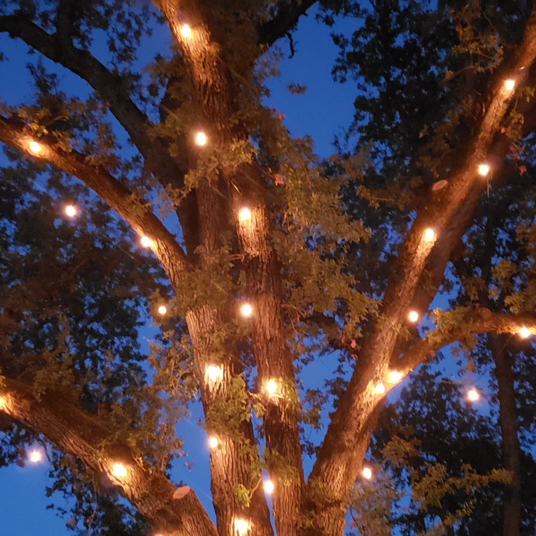 Outdoor wedding lights with Edison bulbs that create ambient lighting throughout the venue