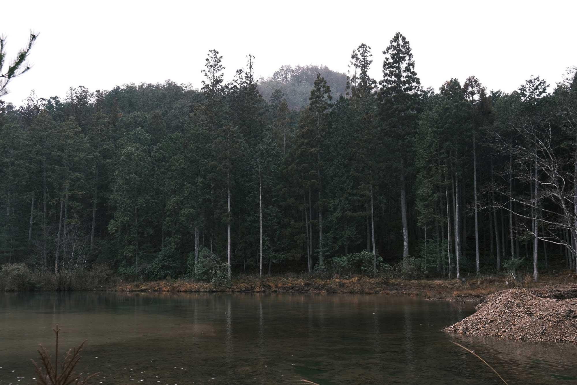 合併記念の森