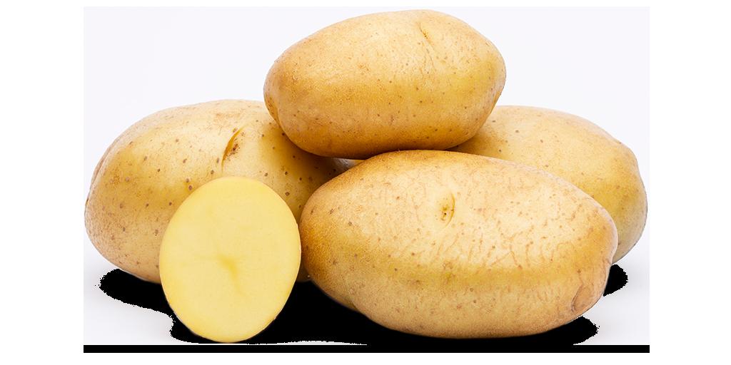 White Potato Varieties from SunRain