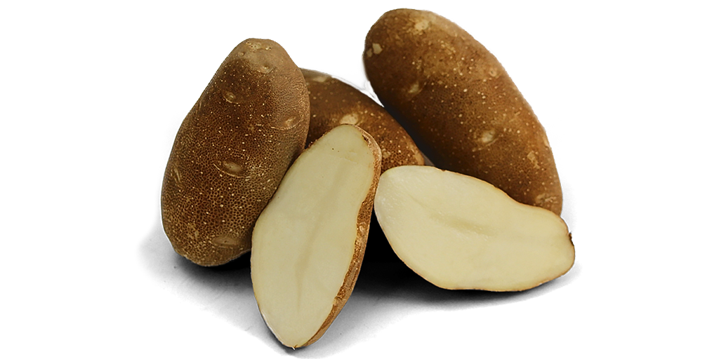 Russet Potato Varieties from SunRain