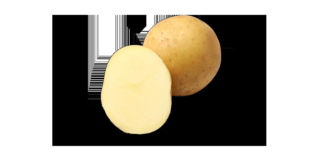 Chip Potato Varieties from SunRain