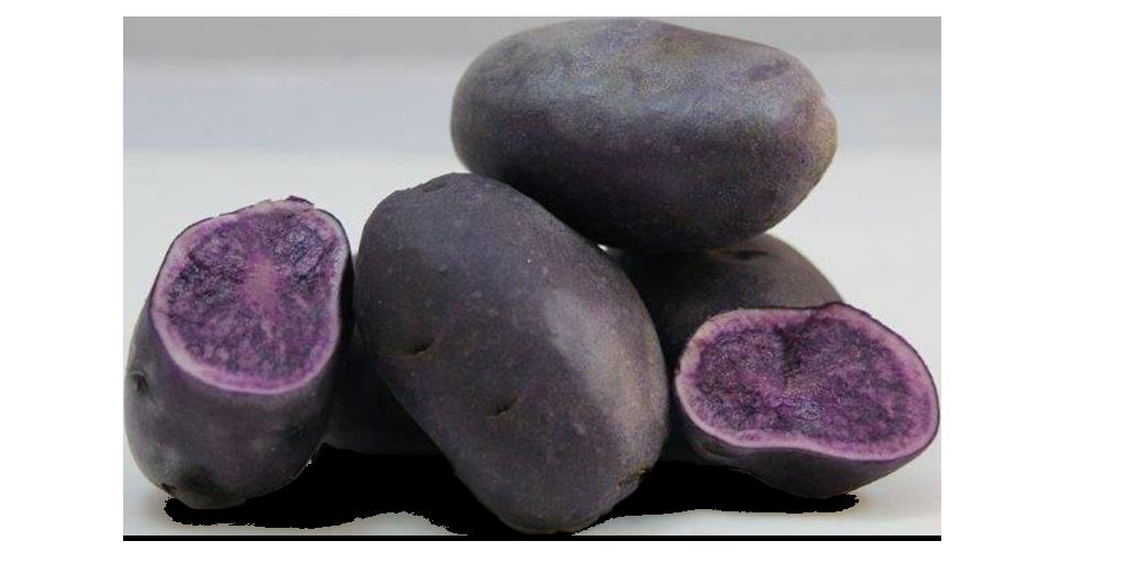 Purple Potato Varieties from SunRain