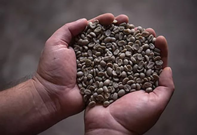 Yave to hold world's first blockchain coffee auction