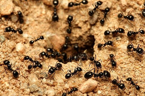 Most Common Pest Control Problems 2021