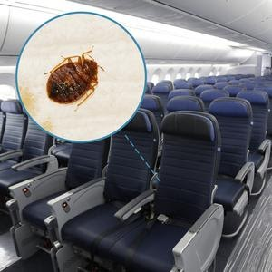 How To Avoid Bed Bugs On Planes