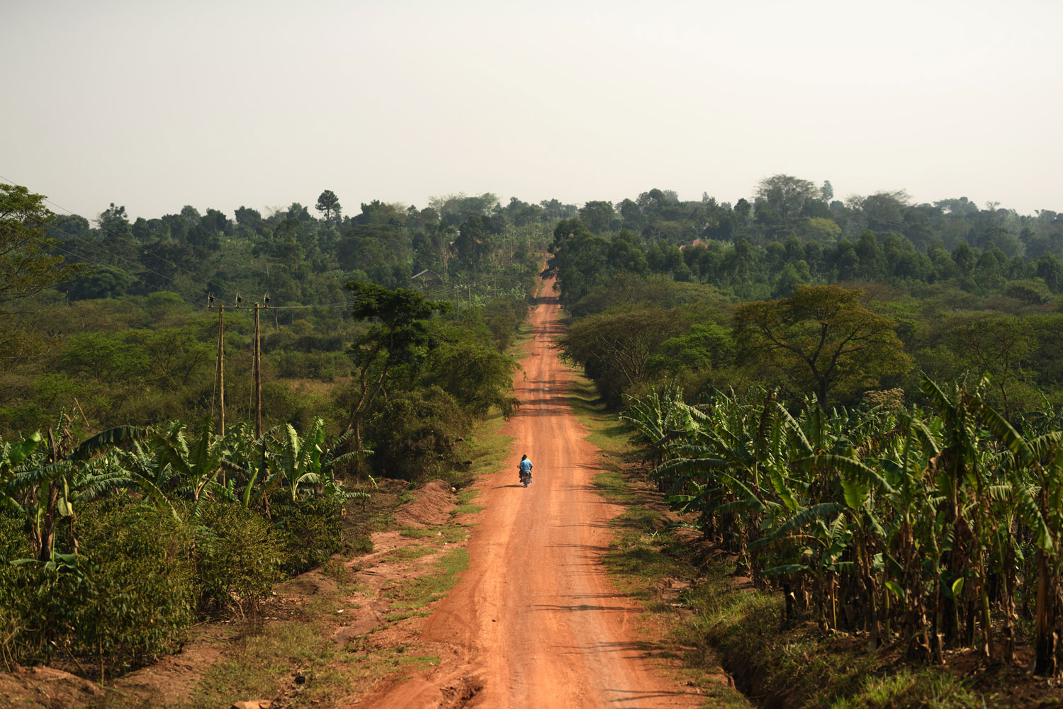 A long road cutting through bright green trees, and a single motorbike driving down the road