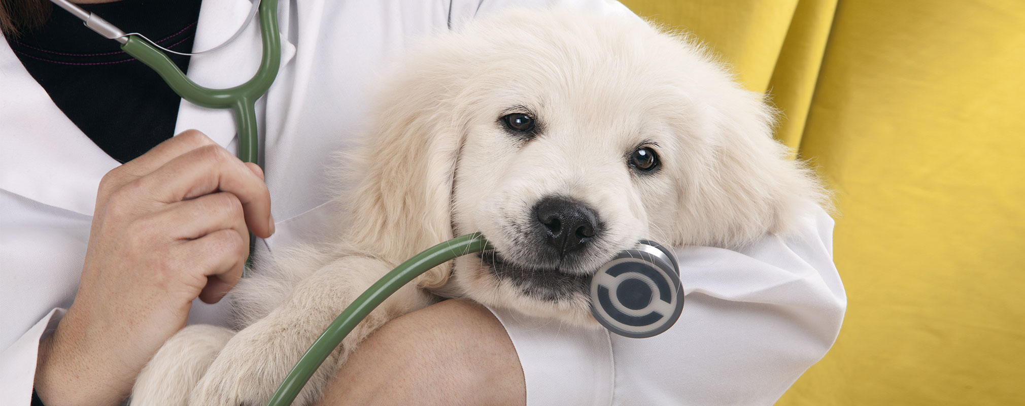 Need A Puppy Vaccination In Orlando